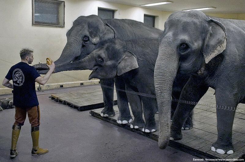 00. БРАВО. слоны Т.Корниловой. 14.10.16.09..jpg