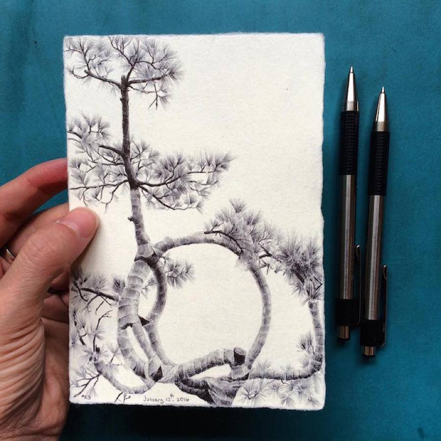 Accurate Drawings of Trees from Around the World