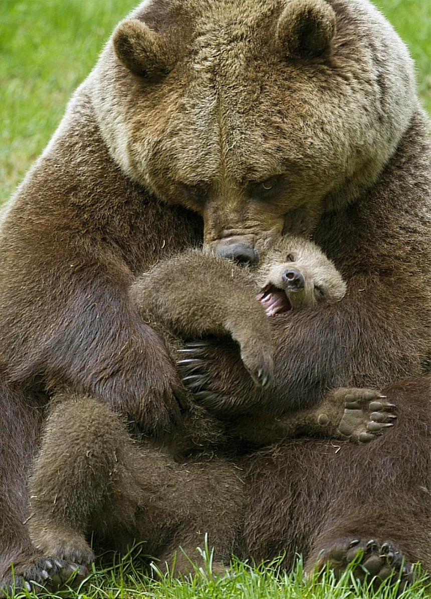 Ох, уж эти медвежата. С мамой лучше!