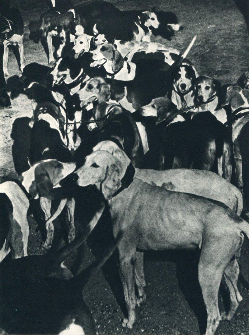 1935. Собаки