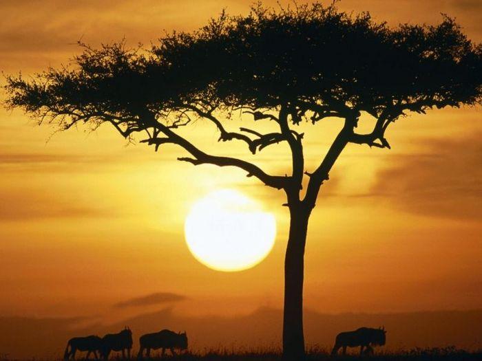 Самые опасные животные Африки (26 фото)