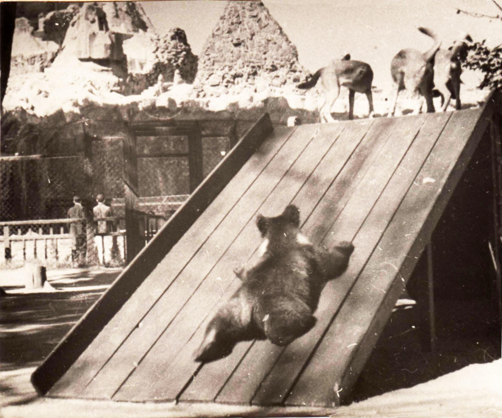 Диапозитив из серии «Мохнатый детский сад», 1937 год. Фото: архив Веры Чаплиной.