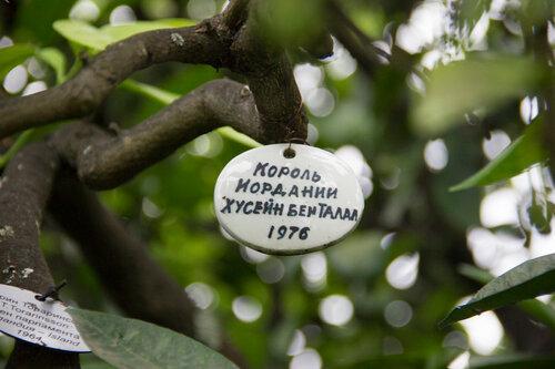 Адлер 2016. Дерево Дружбы