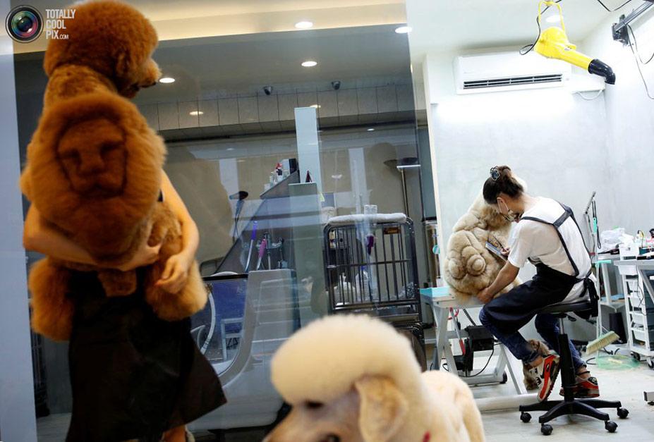 Pet Hairdresser / прически и портреты из шерсти домашних животных
