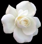 LF-Flower-16032013.png