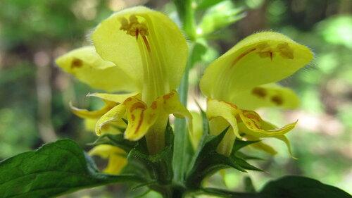 Альбом: Растения  из леса Автор фото: Лариса Петрович
