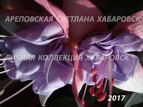 НОВИНКИ ФУКСИЙ. - Страница 5 0_19a01c_dc27eb5a_L