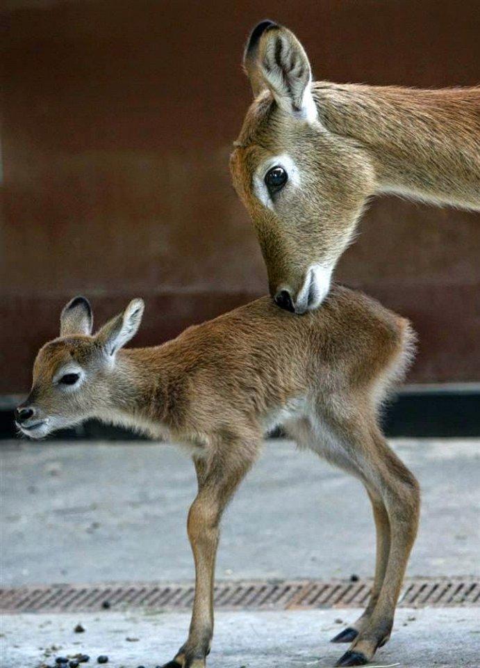 9. Берлинский зоопарк Этот зоопарк не только самый старый, но и самый посещаемый во всей Европе. Еже