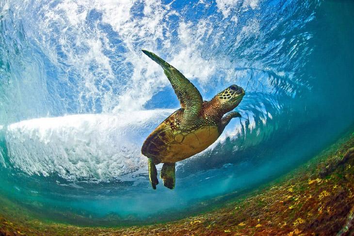 1. Съемка непредсказуемых волн — опасное занятие: