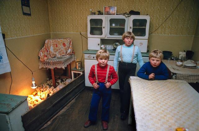 Импровизированный курятник в жилом доме, Лешно, 1982 год.
