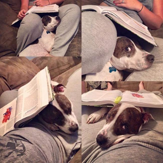 © imgur.com  Пока другие собаки играли впарке, онприглядывал засвоим человеком
