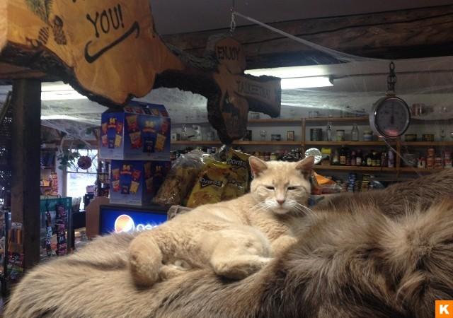 Кот жил у семьи Спон — владельцев магазина в Талкитне. В магазине находился «офис» мэра, там он пров