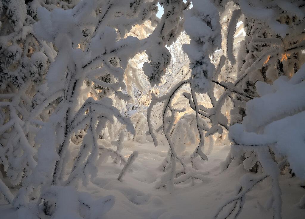 Снежный этюд