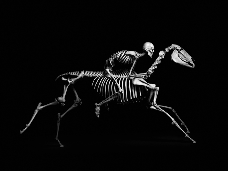 Evolution: A Stunning Monochromatic Exploration of Vertebrate Skeletons by Patrick Gries (11 pics)