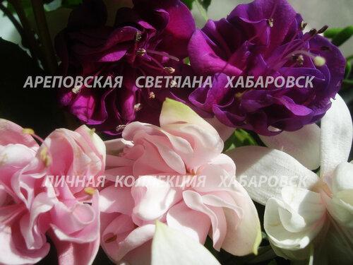 НОВИНКИ ФУКСИЙ. - Страница 5 0_15910c_8ee6690f_L
