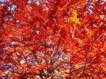 Пышная осень