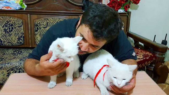 © Nobel Peace Prize to Alaa  «Так как все мои знакомые иродственники покинули город, эти кошк