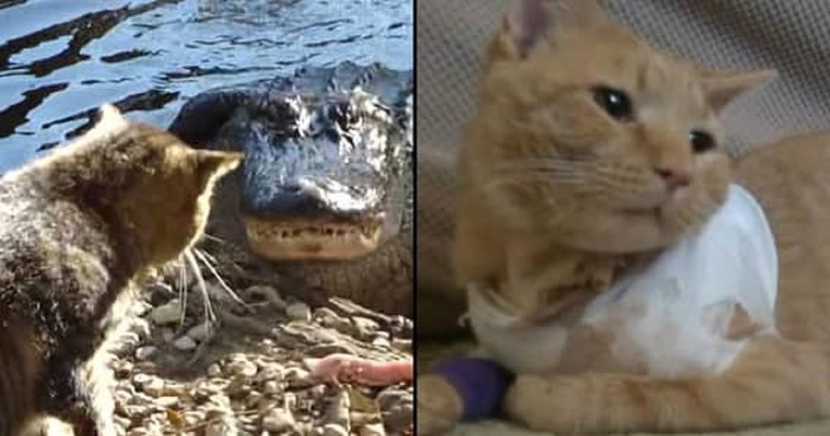 Эти героические коты спасли жизнь своим хозяевам (14 фото)