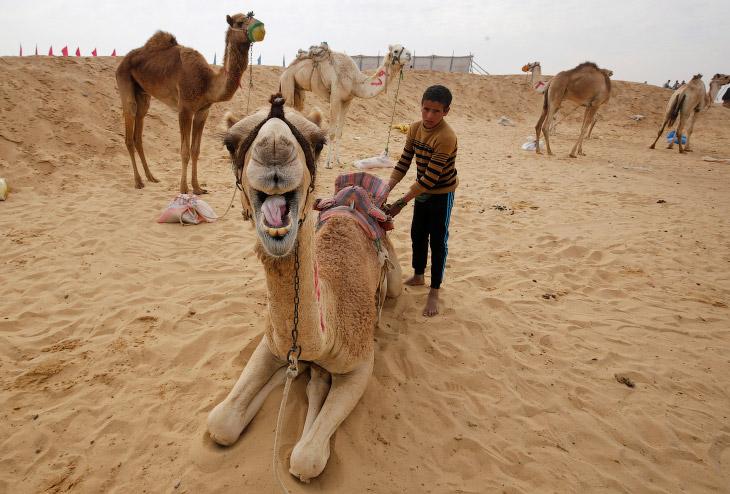 1. Суета перед стартом. Пустыня в Исмаилии, Египет, 21 марта 2017. (Фото Amr Abdallah Dalsh | R