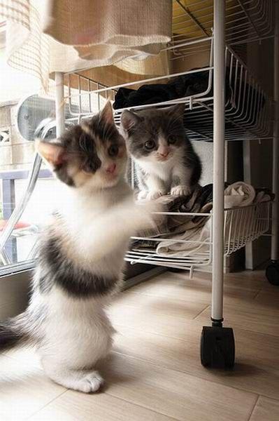 Котята – брат и сестра (18 фото)