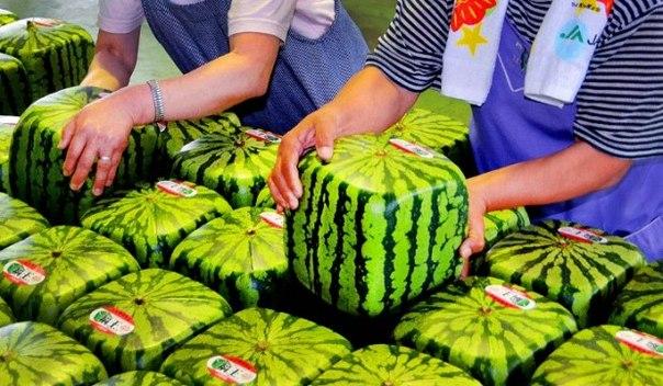 Такая форма была создана фермерами для удобства складирования и хранения арбузов. Это не ГМО, а
