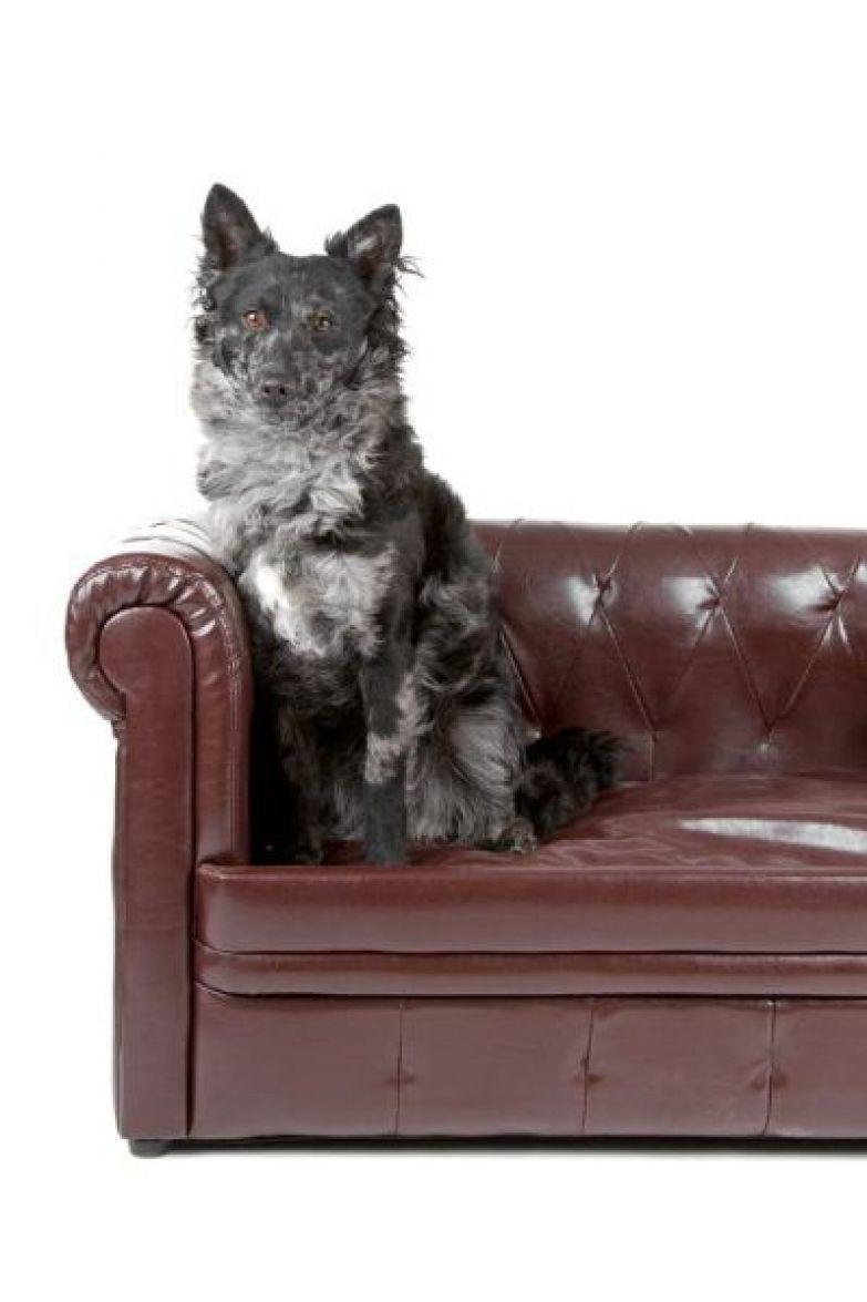 Муди (ударение на последний слог) – венгерская порода пастушьих собак. Изначально была выведена