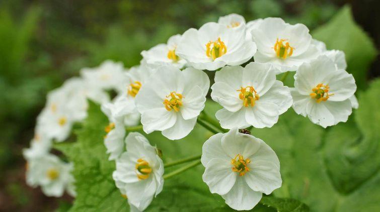 1. Встретить это удивительное многолетнее растение можно во многих областях земного шара, включая Да