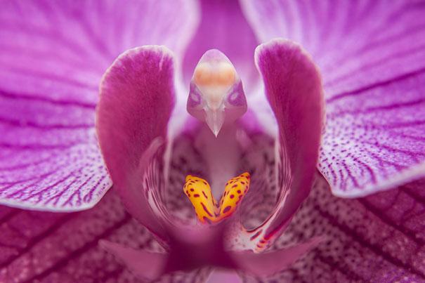 Чудеса природы в виде необычных цветов (33 фото)