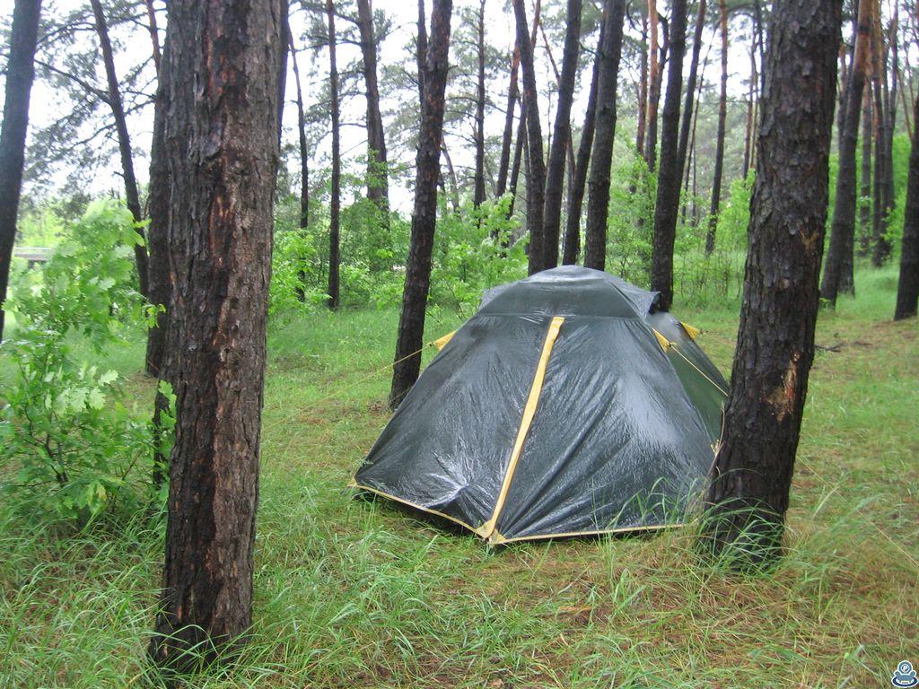 Мокрая палатка в сосновом лесу