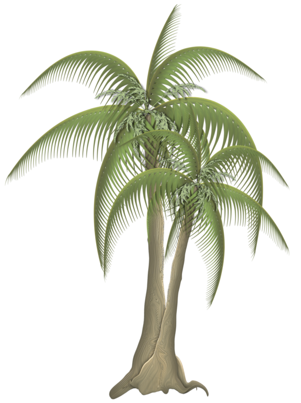 TP_Palms_02.png