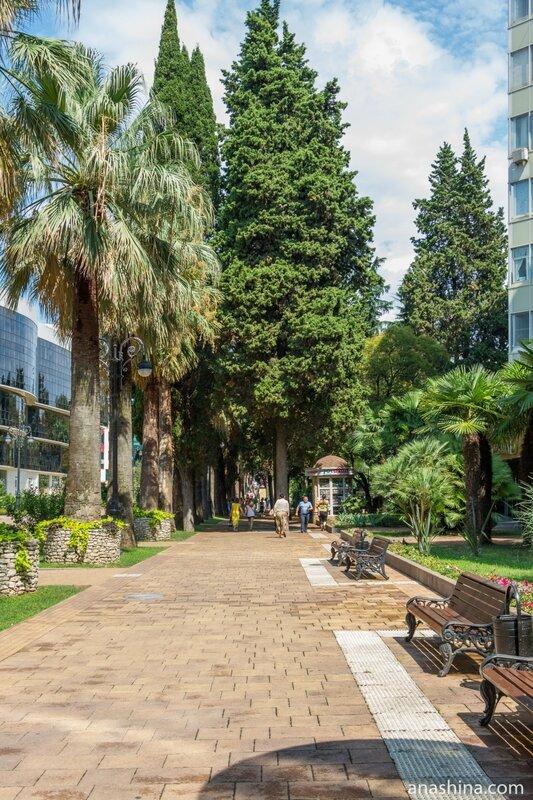 Кипарисы и пальмы, Навагинская улица, Сочи