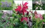 Начало лета - июнь-2015