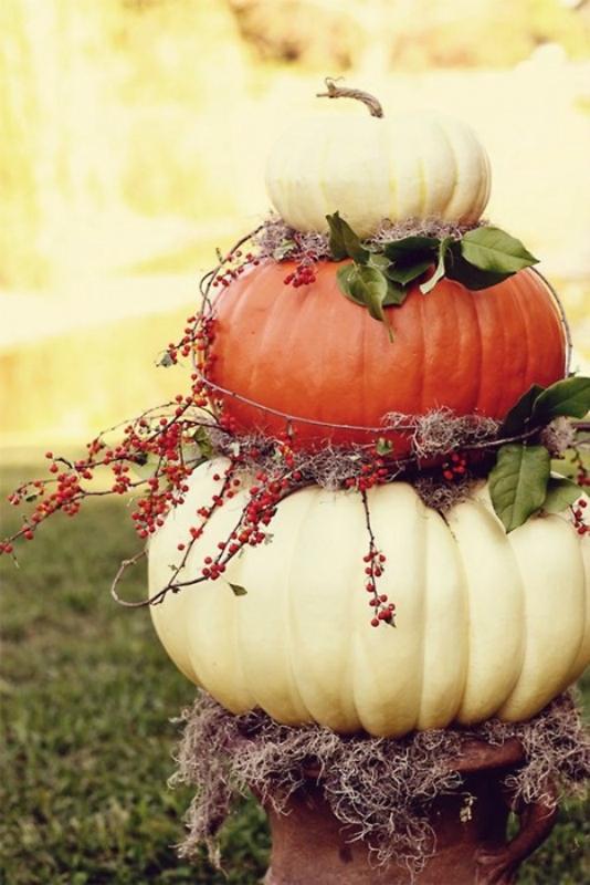 Сентябрь - основные работы в сентябре-Тыква