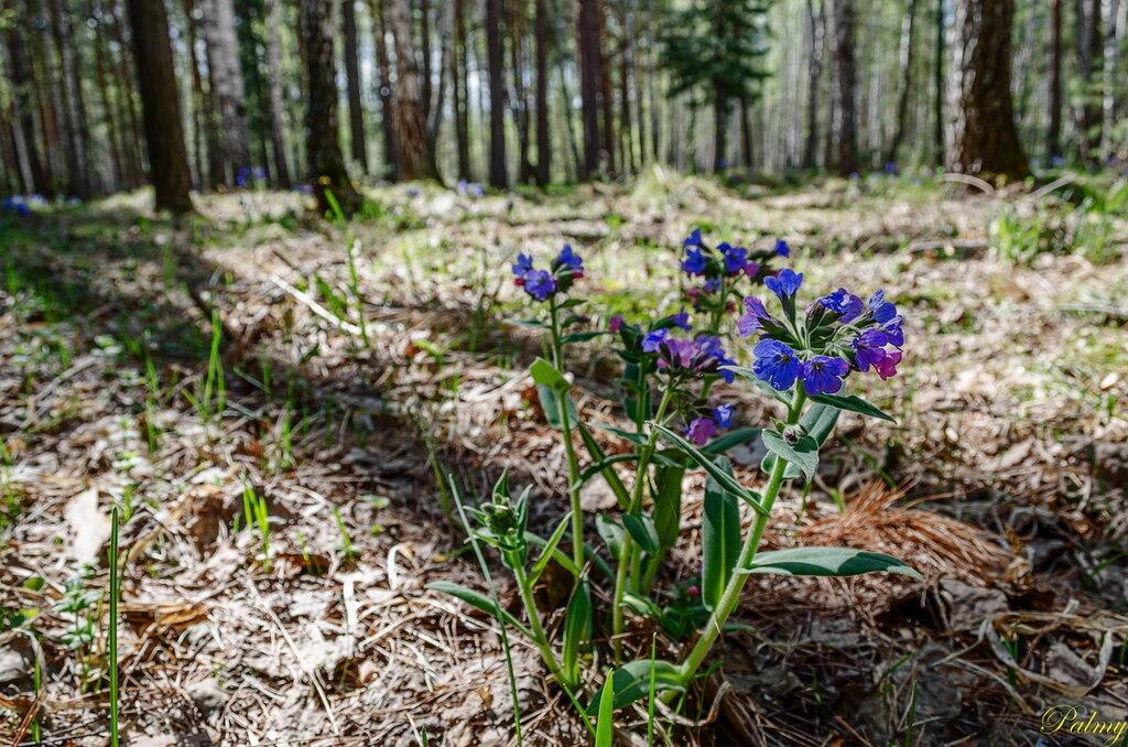 Весна в лесу