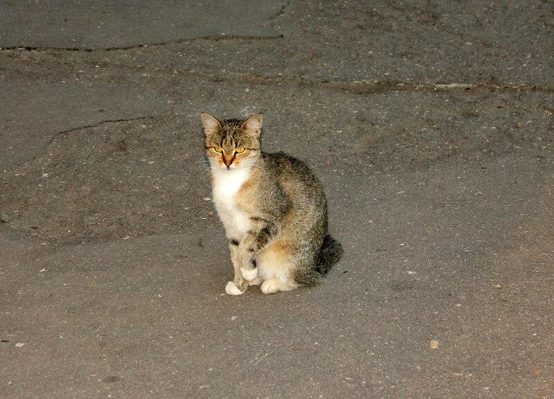 Кошка на платформе станции Ржев-балт