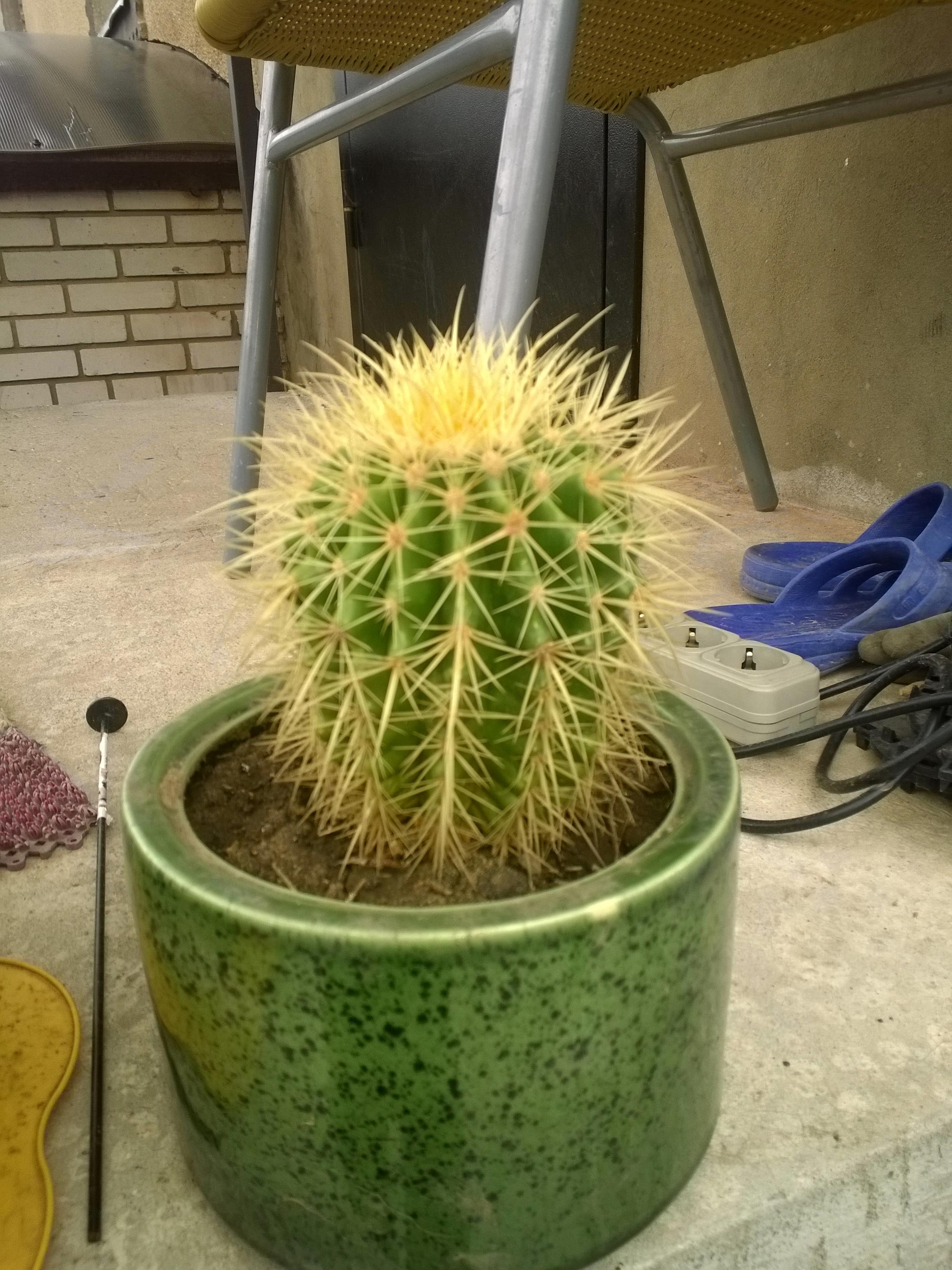 Ларисины кактусы (5).jpg