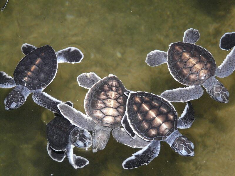 черепахи названия и фото
