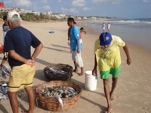 Разбор улова рыбы