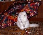 Кошки (Cats, Gato, Chats)