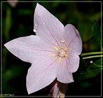 Flora (Plants)