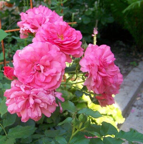 Квітковий подарунок Ірині (Ірма)