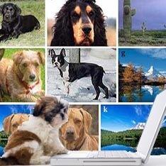 Собаки думают по-человечески