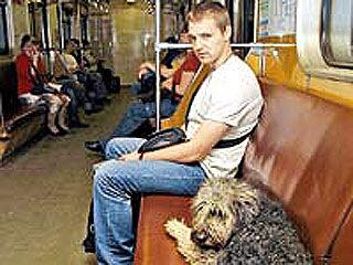 По оценкам экспертов, ежедневно подземка перевозит не только 9 миллионов людей, но и около полусотни собак