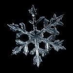 SnowFlake_11.jpg