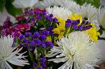 Многоцветье