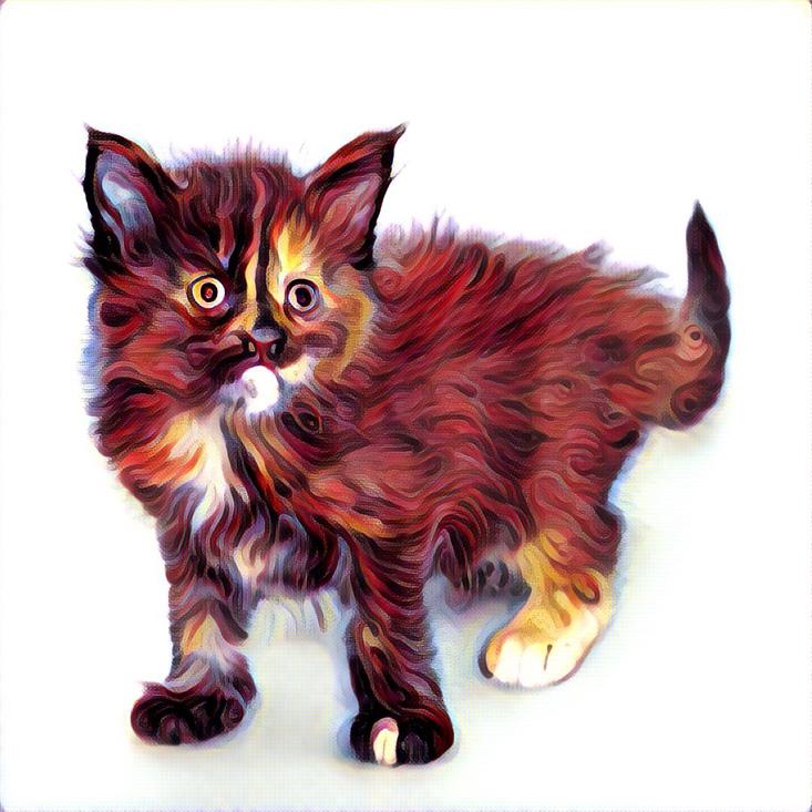 котенок prisma