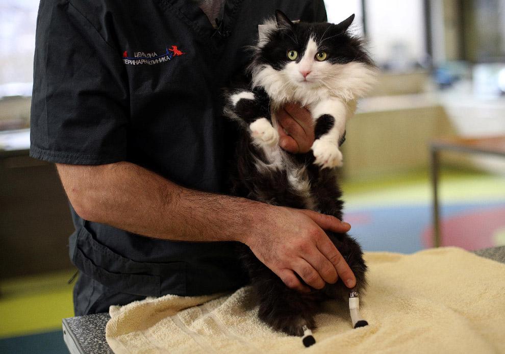 8. Бионический кот из Софии. (Фото Nikolay Doychinov):