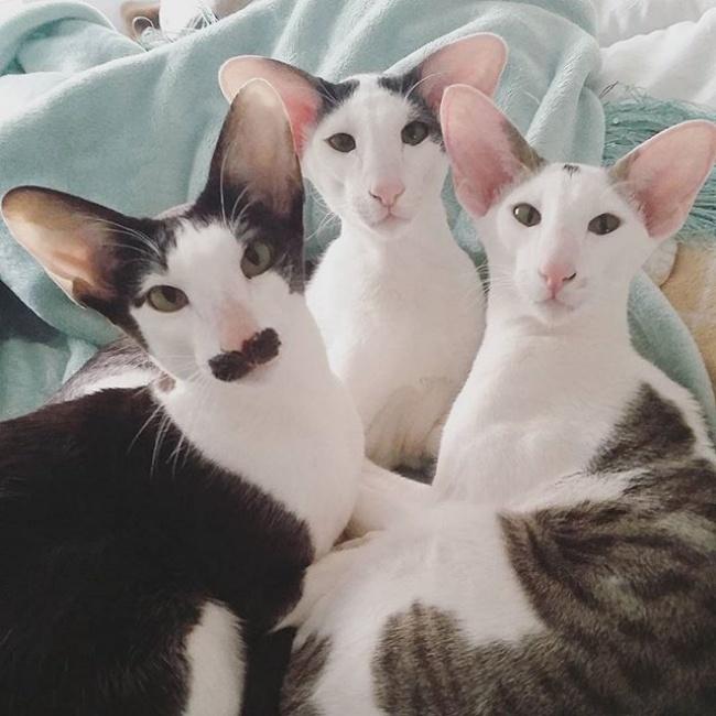 Конечно, кошки вполне способны позаботиться осебе сами