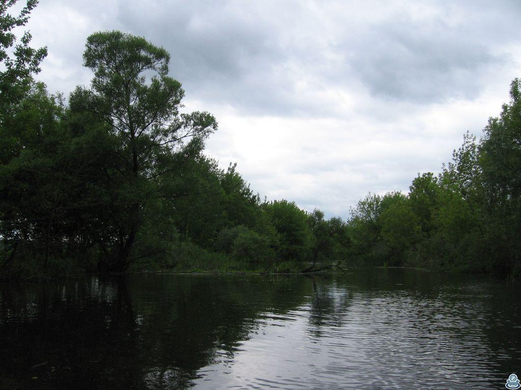 Дерево в реке