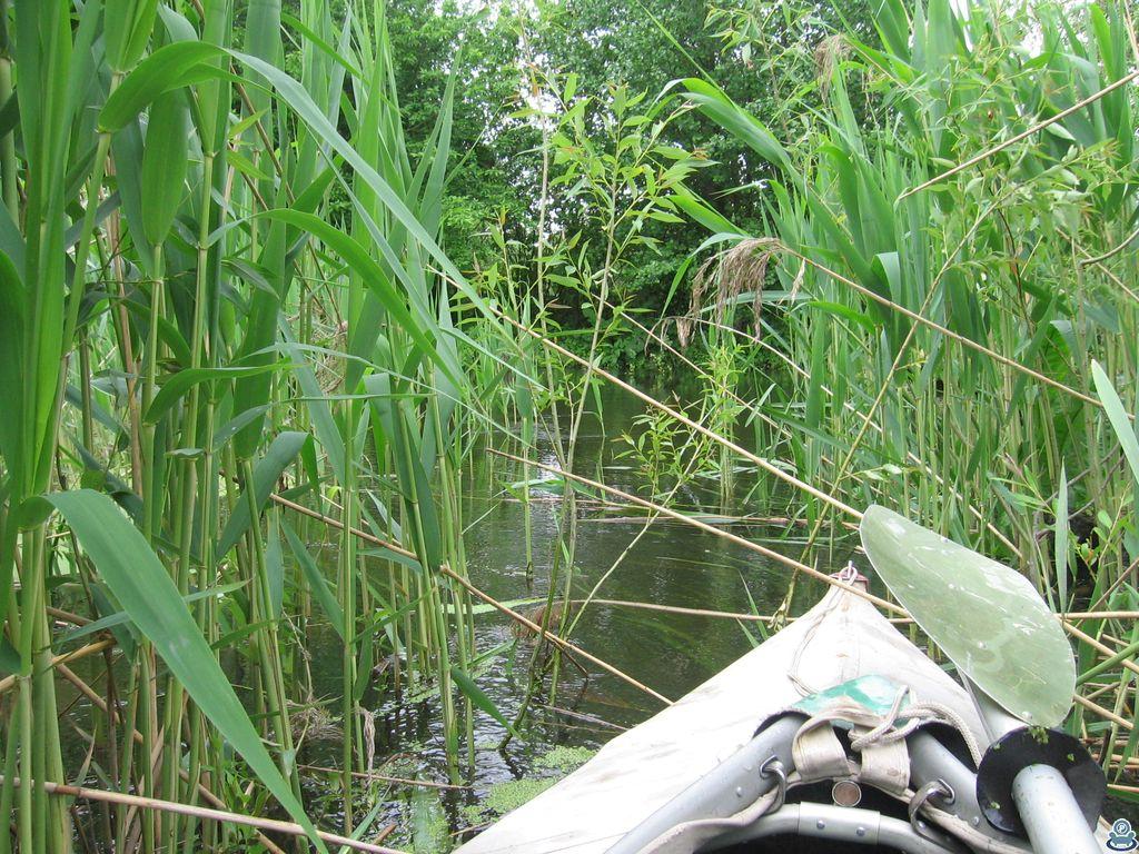 Проход в тростнике